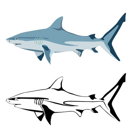 Vector image of shark and its black silhouette isolated on white background. Standard-Bild - 104998114