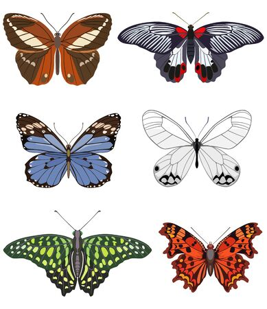 Vector set of color detailed butterflies on light background in flat style. Design templates for textiles, creativity, applications.