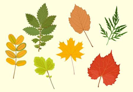 Set of colored autumn leaves. Vector illustration Иллюстрация