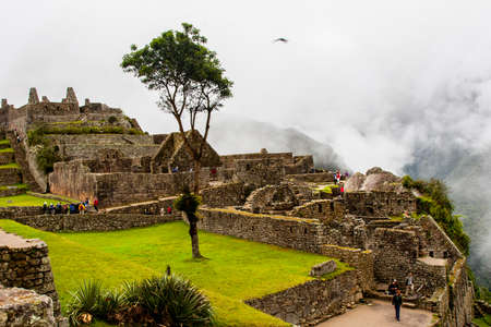 Trees on terraces at Machu Picchu lost city in the nature of the Andes mountains. Peru. South America. No people. 写真素材 - 104781760