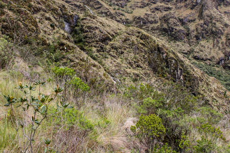 Detail of the untouched nature in the Andes mountains on the Inca Trail. Peru. South America. No people. Stock Photo