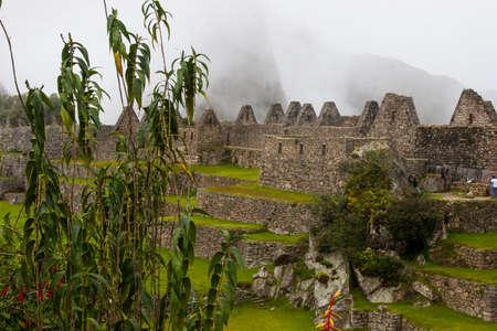 Beautiful red, yellow and purple flowers at Machu Picchu. Peru. No people.