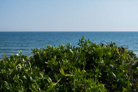 Nature landscape wallpaper background sea water behind green dunes on a summer day with blue sky and sun. No people.
