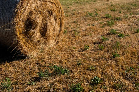 Landscape of a green field with hay rolls with a bright sun in blue sky. Beautiful wallpaper. Banque d'images