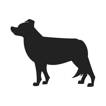 obedience: Border collie black silhouette. Obedience dog design, vector flat illustration