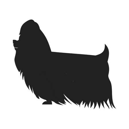 yorkshire terrier: Vintage vector image of a black silhouette of a thoroughbred Yorkshire Terrier dog standing straight isolated on white background looking like a shadow of the image.