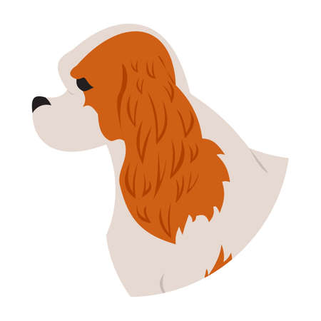 Dog head cavalier charles king spaniel isolated on white background. Vector illustration