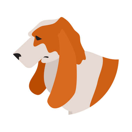 basset hound: Dog head basset hound. Pet domestic playful, young mammal, vector illustration