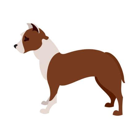 obediencia: pit bull terrier americano animal perro, ilustración vectorial raza doméstica