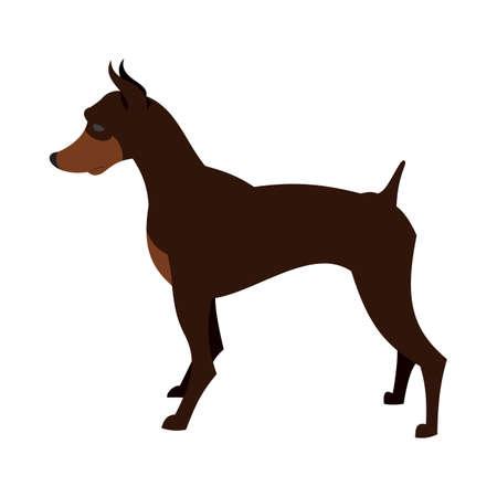 Doberman pincher dog breed for guard and security, vector illustration Illustration