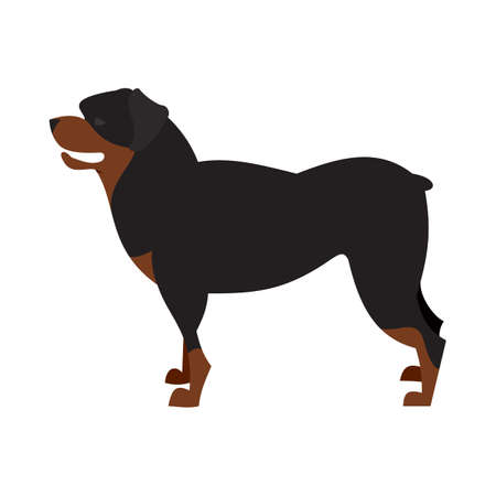 Dog breed rottweiler and animal pet domestic, purebred cute hound,  illustration