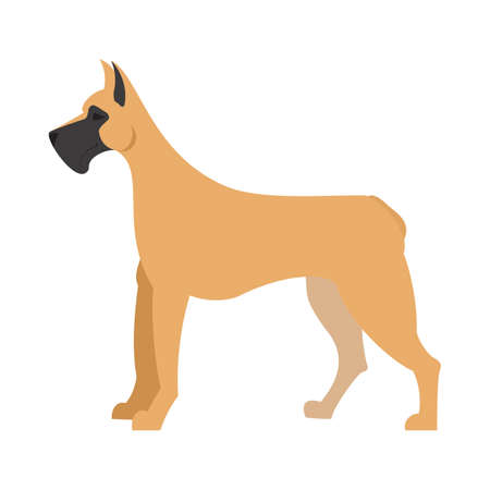 dane: Great dane dog and large doggy pet, domestic mammal vector illustration