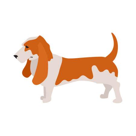 purebred: Basset hound dog and pet companion, purebred hound breed,  illustration