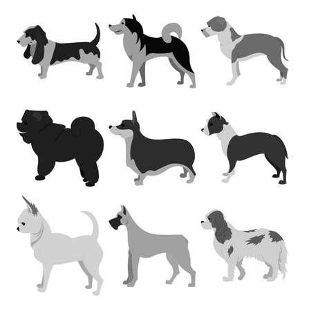 Dogs flat set of beagle and chihuahua, malamute and pembroke,  illustration