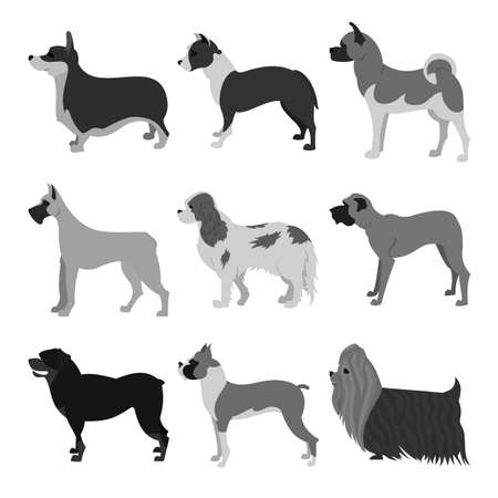 alaskan malamute: Dogs flat set of boxer and malamute, pembroke and rottweiler,  illustration Stock Photo