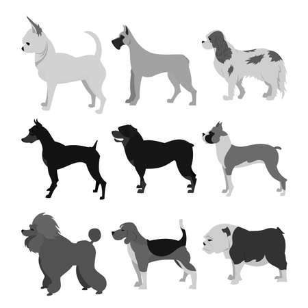 Dogs flat set. Beagle and boxer, bulldog and chihuahua,  illustration