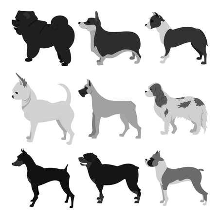 Set of dog breeds. Boxer and chihuahua, doberman and pembroke,  illustration