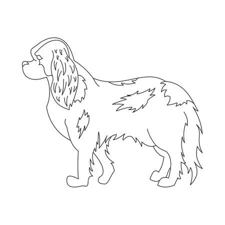 charles: King cavalier charles spaniel. Line doggy pedigree, creative mammal, vector illustration
