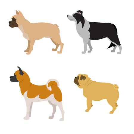 akita: Collection of purebred dogs akita  and collie,