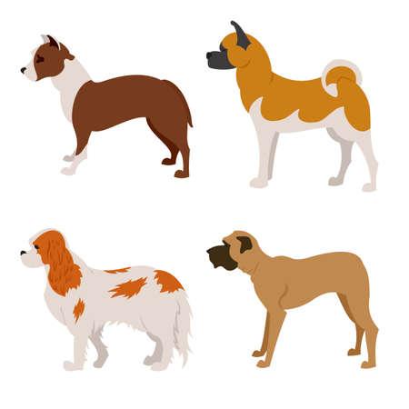 Collection of purebred dogs akita and mastiff, pet dog animal, illustration Illustration
