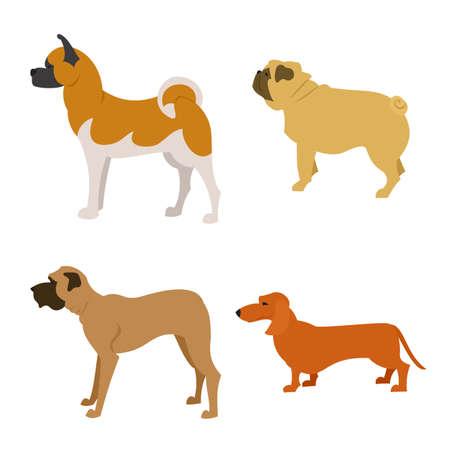 akita: Set of purebred dogs isolated on white Mastiff pet and dog animal.