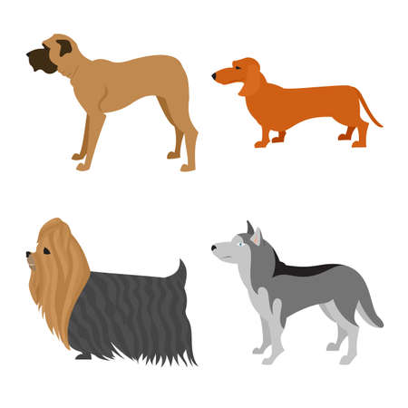 Dogs flat set. Husky and mastiff, terrier yorkshire and dachshund, Illustration