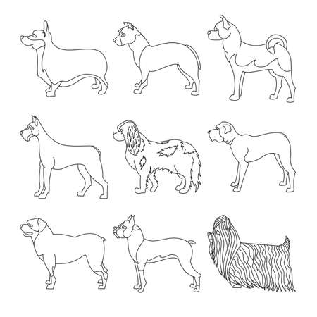 akita: Collection of dog in line.  malamute and akita, Illustration