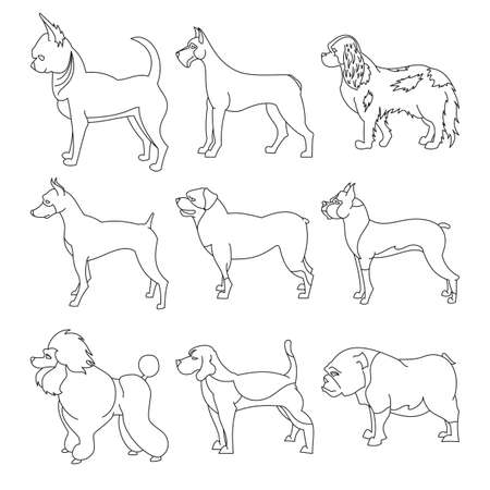 Set of purebred dogs in linear style. and chihuahua, Illustration