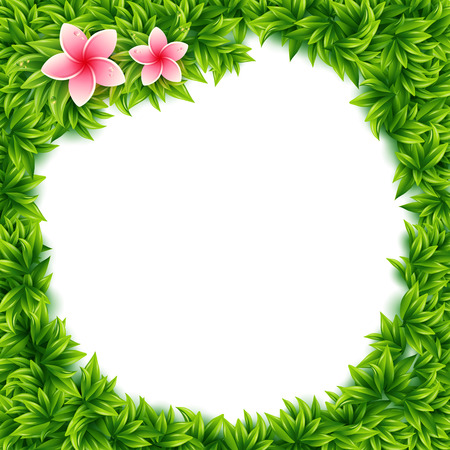 pink plumeria: Fresh green spring leaves and tropical flowers frame with central blank white copyspace and pink frangipani flowers in square format, vector illustration Illustration