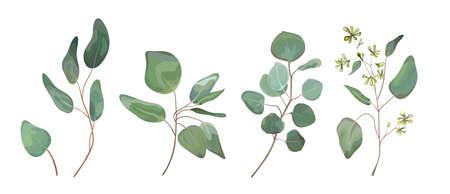 Eucalyptus ensemencé arbre dollar argent feuilles art de concepteur, feuillage, éléments de branches naturelles dans la collection de jeu de style rustique aquarelle. Vector nature décorative diverse illustration élégante pour la conception