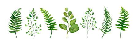 Éléments de design vectoriel mis collection de forêt verte fougère fronde maidenhair verdure art feuillage feuilles naturelles herbe dans la collection de style Aquarelle. Illustration élégante de beauté décorative pour la conception
