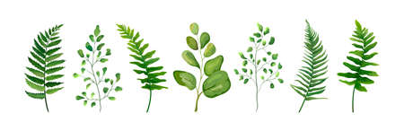 Coleção do grupo de elementos do desenhista do vetor da erva natural das folhas da folha da arte das hortaliças da fronda da samambaia da samambaia da floresta na coleção do estilo da aquarela. Ilustração elegante de beleza decorativa para design
