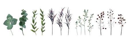 Eukaliptus z nasionami, niebieski agonis tymianek, szparagi berry projektant sztuki akwarela liście naturalne gałęzie liści zestaw elementów, kolekcja. Wektor ozdobny piękny ładny elegancki ilustracja do projektowania.