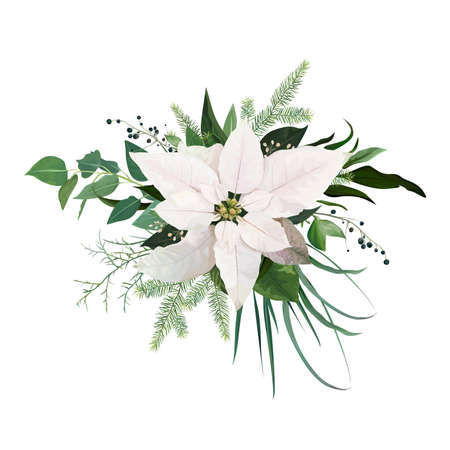 Vector elegant creamy white poinsettia flower, Christmas tree branches, eucalyptus greenery, green leaves, berry bouquet. Forest rustic watercolor style holiday illustration, editable designer element