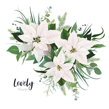 Vector elegant white Poinsettia flower, Christmas tree branches, eucalyptus greenery, green forest leaves floral bouquet. Elegant, cute watercolor style holiday illustration, editable designer element