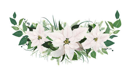 Winter season festive Christmas, new year garland with tender white Poinsettia flowers, spruce tree twigs, Eucalyptus greenery branches, green leaves and berries. Vector, floral watercolor art bouquet