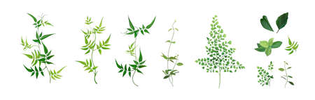 Vector designer elements set, collection. Green forest fern, tropical green smilax Jackson vine greenery foliage, herbs. Watercolor style. Beautiful art editable illustration for wedding invite design Иллюстрация