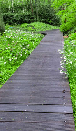 Wood path over  through green  forest photo