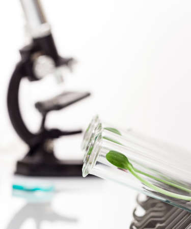 Test Tubes with small plants Stock Photo