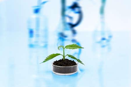 Seedlings in lab