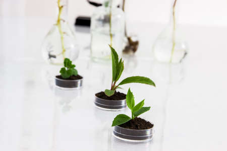 Seedlings in lab