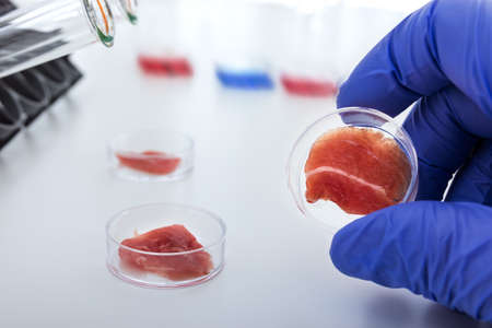 Meat cultured in laboratory conditions from stem cells Archivio Fotografico