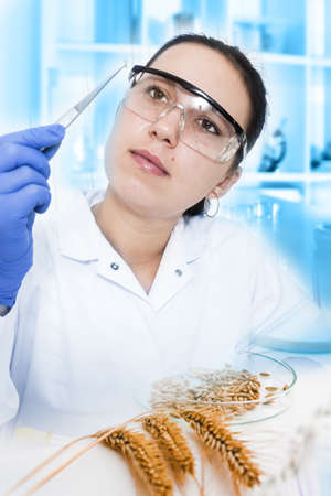 laboratory assistant analyzing a blood sample photo