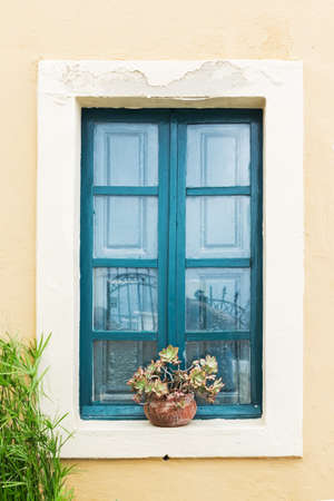 Vintage window  and plant . photo