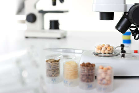 Seed subject to selection in Microbiological laboratory photo