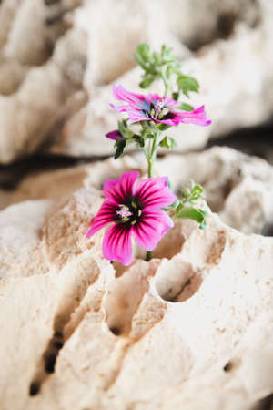 crevice: Wildflowers growing in a small crevice in  rocks
