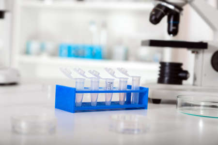 Micro tubes with biological samples in laboratory for DNA analysis Stock Photo