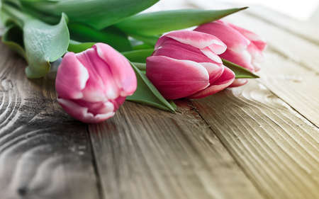 Pink tulips on a wooden background with space for text photo