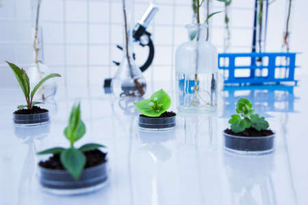 biology lab: Genetically modified plant tested in petri dish .Ecology laboratory Stock Photo