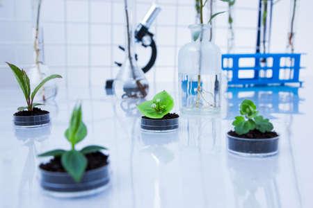 Genetically modified plant tested in petri dish .Ecology laboratory Archivio Fotografico